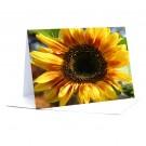 Sonnenblume   Foto-Faltkarte A5