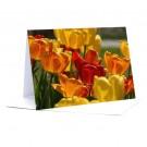 Tulpen  Foto-Faltkarte A5