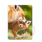 Fuchs mit Jungem